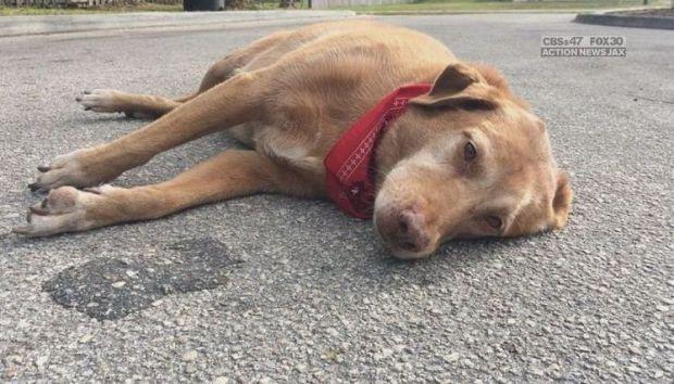 Cão se recusa a sair de lugar onde dona morreu atropelada