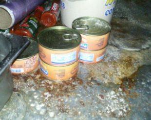Alimentos estavam guardados de maneira irregular na cozinha de pizzaria (Foto: Divulgação/Polícia Civil)