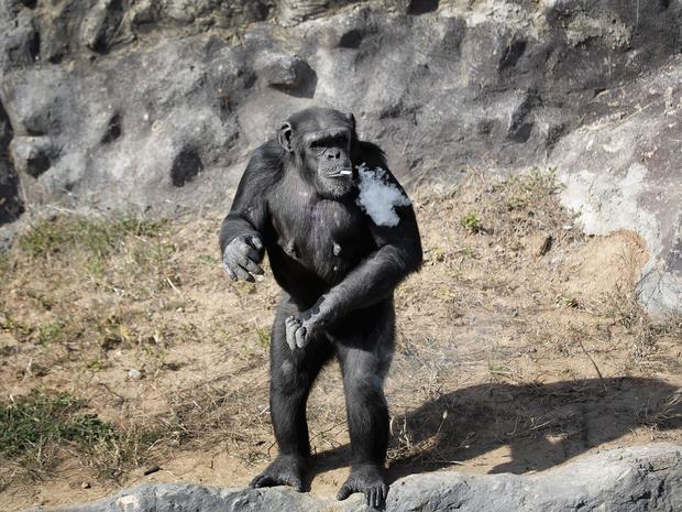 macaco-fumante2