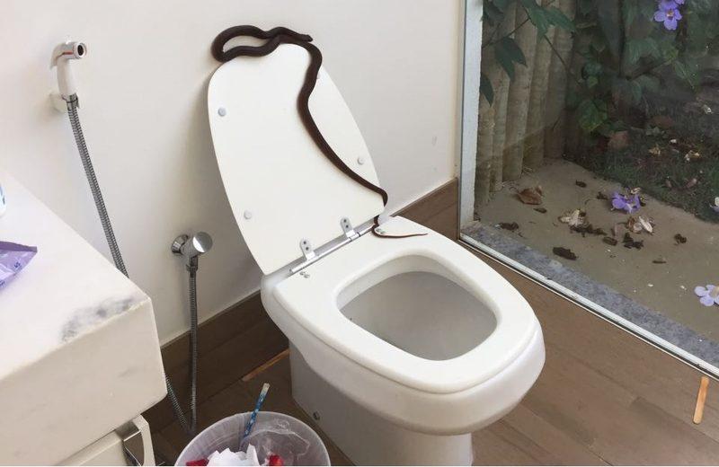 Juru em destaque cobra encontrada em banheiro for Espejo de 1 metro por 2 metros