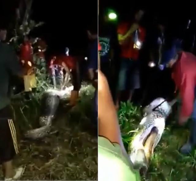 Corpo de indonésio é encontrado dentro de píton