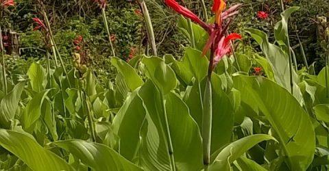 Flores do Campo em Serraria, Paraíba
