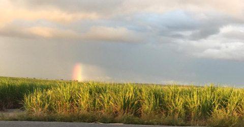 Feixe de luzes coloridas rompe o céu e atinge canavial em Santa Rita